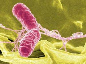 Формы проявления инфекционных болезней