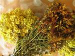 Лечение заболеваний почек травами