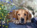 Судорожный синдром у собак - признаки и причины